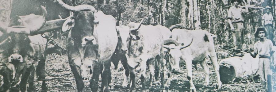 Chapecó 104th Anniversary - Part 2